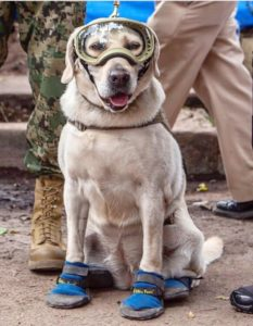 A diferencia de 1985, hoy la ciudadanía contó con la ayuda de perros especializados de rescate, como la ya célebre Frida, que salvaron decenas de vidas.